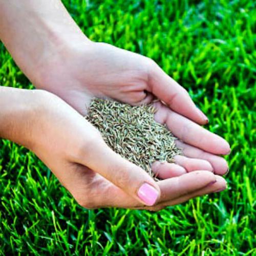 Как сажать семена травы для газона 51